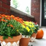Learn how to stencil clay pots