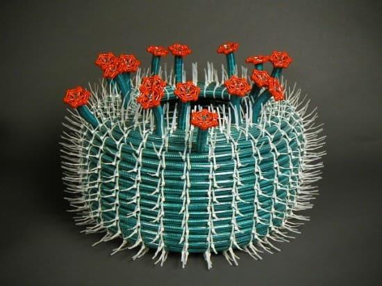 hose-cactus