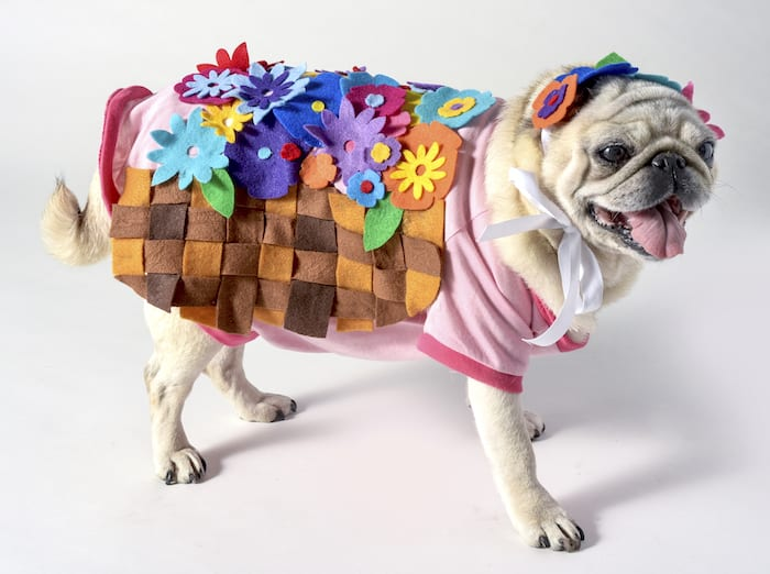 All you need for this simple dog Halloween costume is a doggy tee, a bunch of felt, and a glue gun! So easy to make and cute as can be.