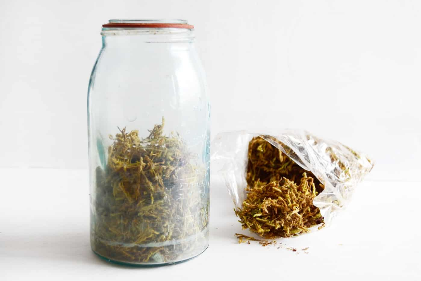 mason jar with spanish moss inside