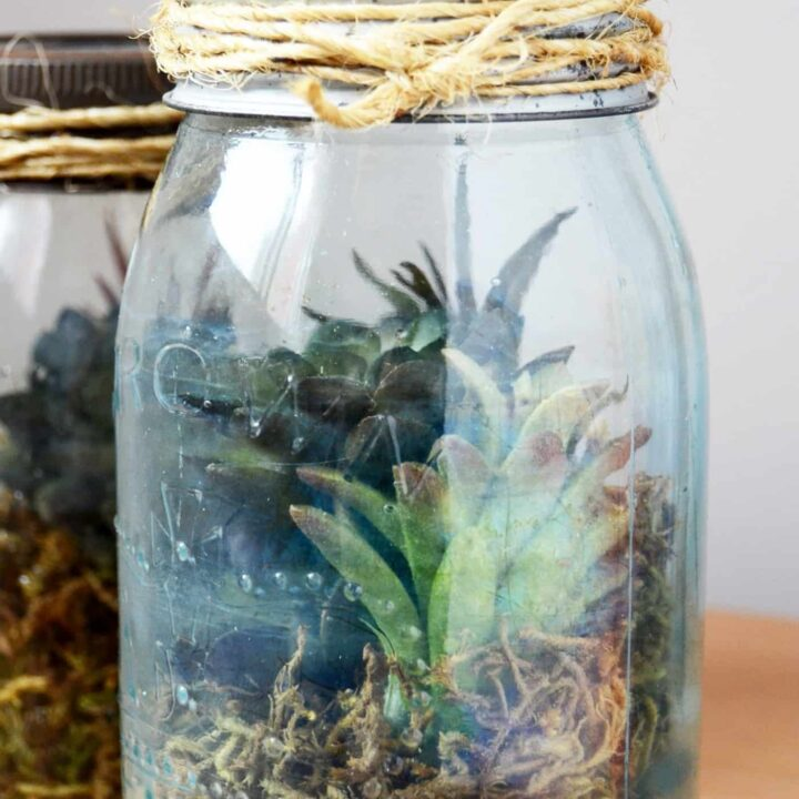 Faux Terrarium With Vintage Style In Minutes Diy Candy