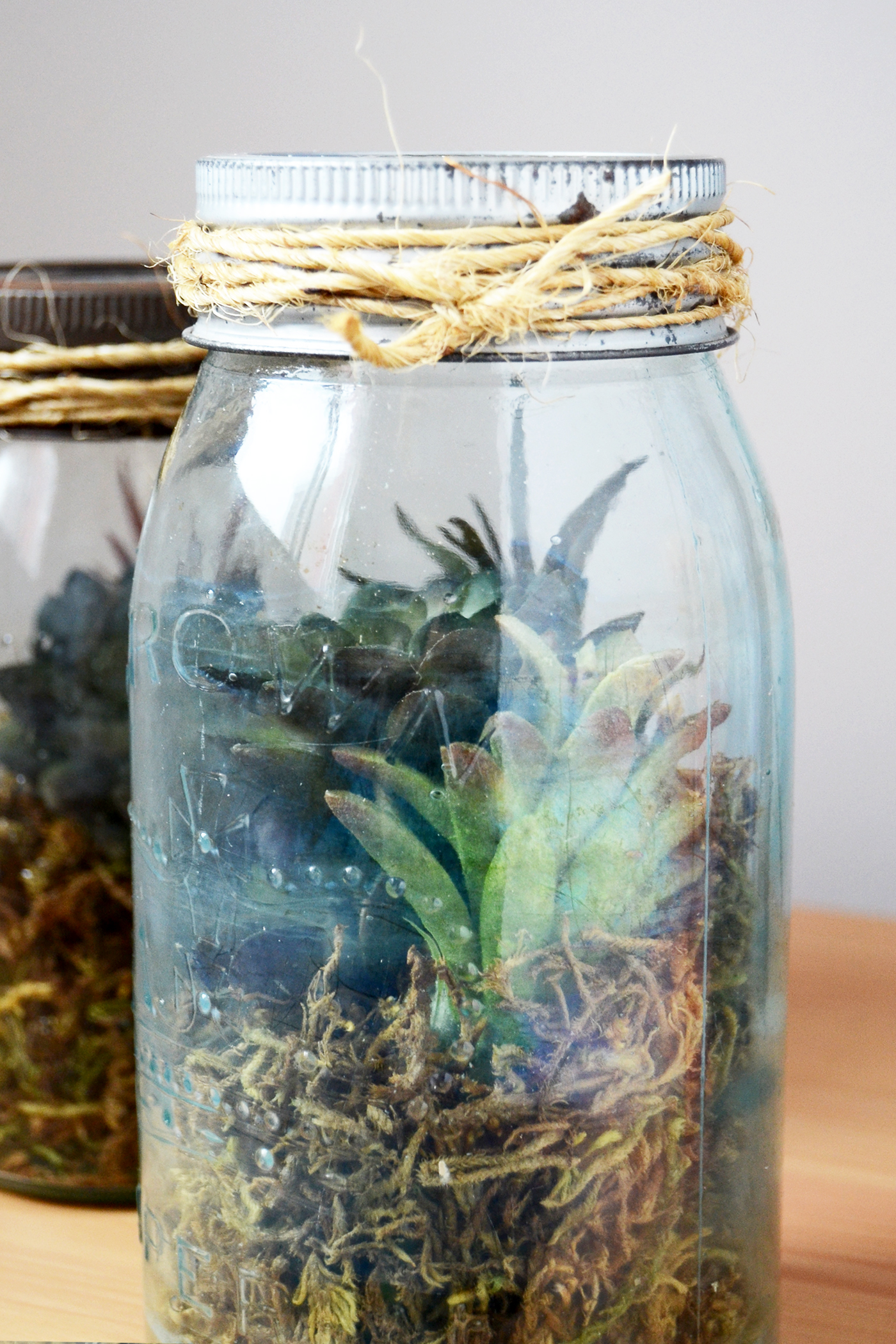 These Learn How To Make A Diy Terrarium Using A Vintage Mason Jar And  Succulents