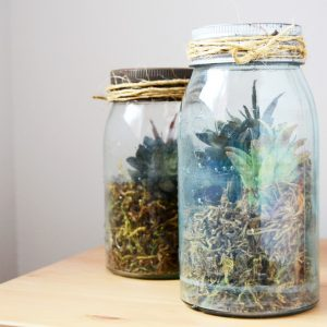 Learn how to make a DIY terrarium using a vintage mason jar and succulents. These make attractive and budget friendly home decor - in minutes!