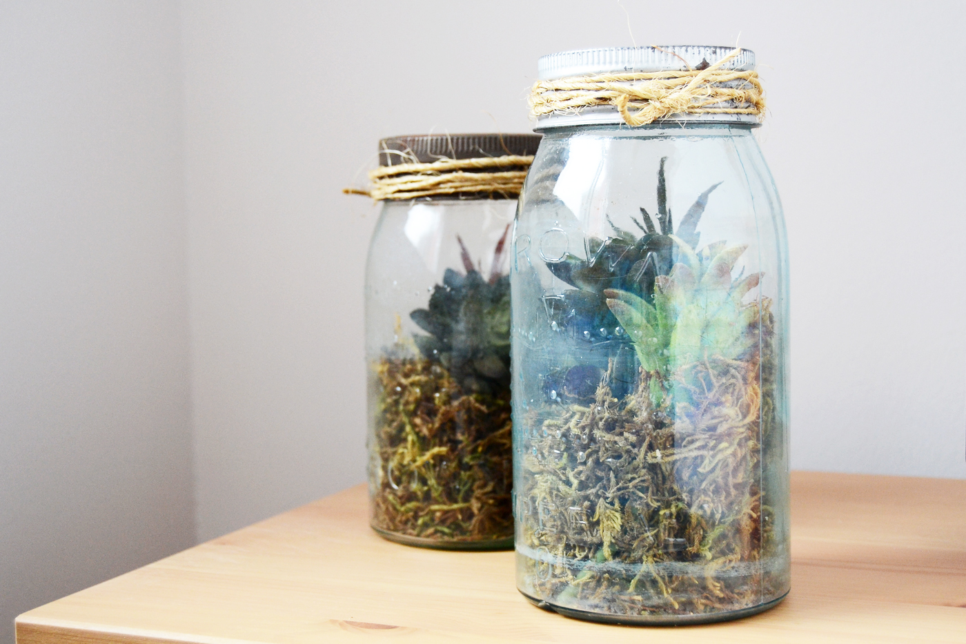 Learn How To Make A Diy Terrarium Using A Vintage Mason Jar And Succulents