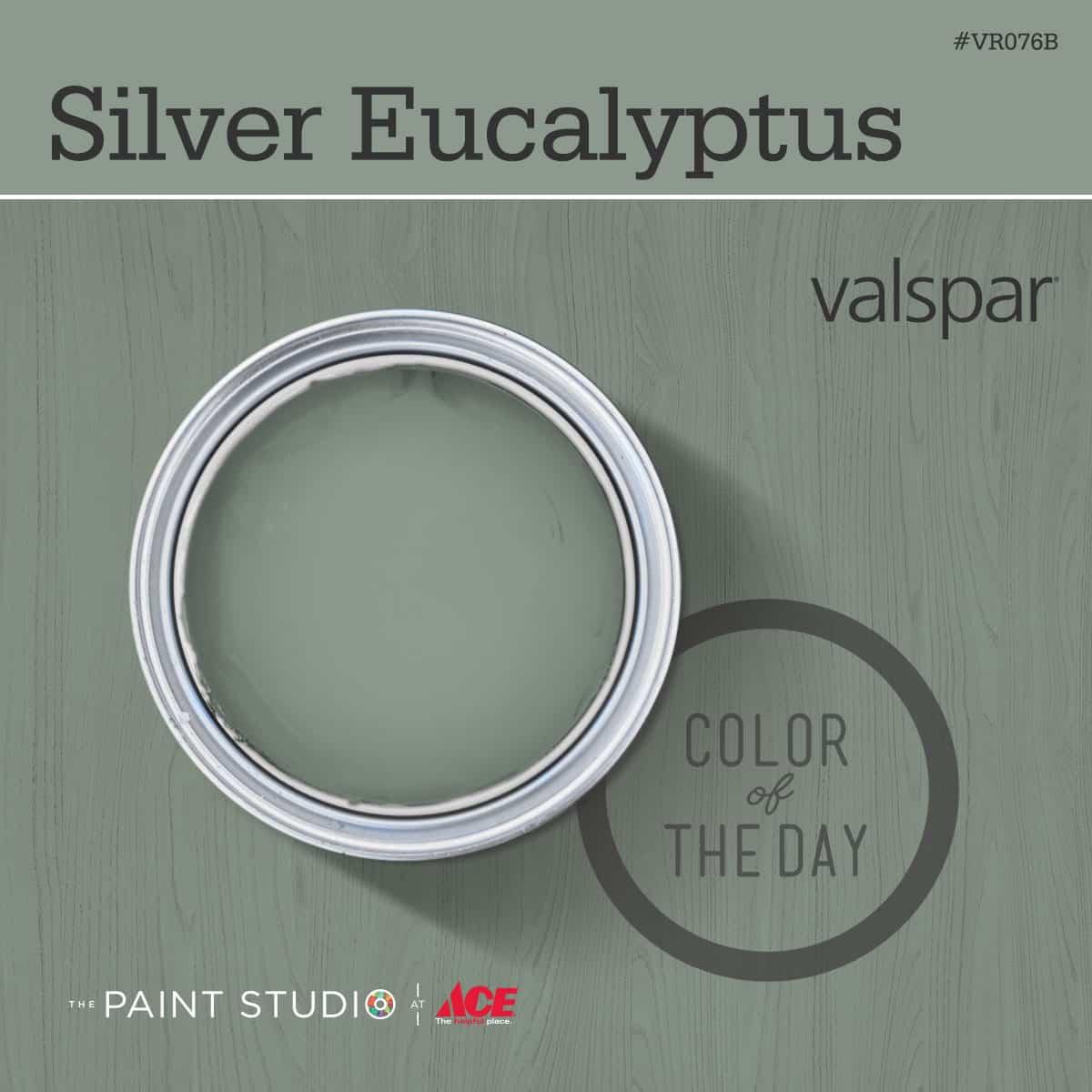 26Silver_Eucalyptus_1200x1200