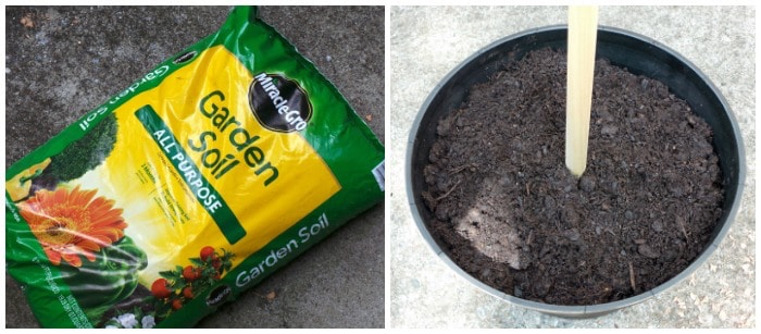 Miracle Gro garden soil placed into a planter