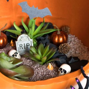 How to Make a Spooky Pumpkin Terrarium