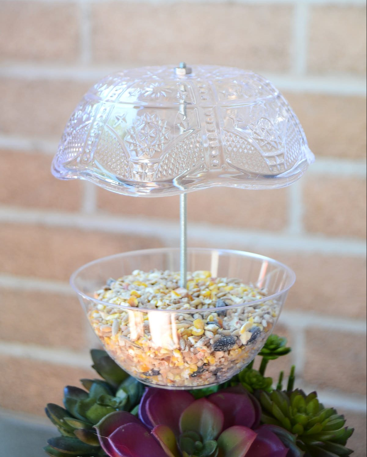 DIY bird feeder with plastic plates