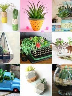 Over 15 Ways to Display Succulents
