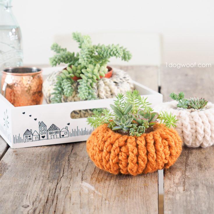 succulent pumpkin pin2 e1627402036605